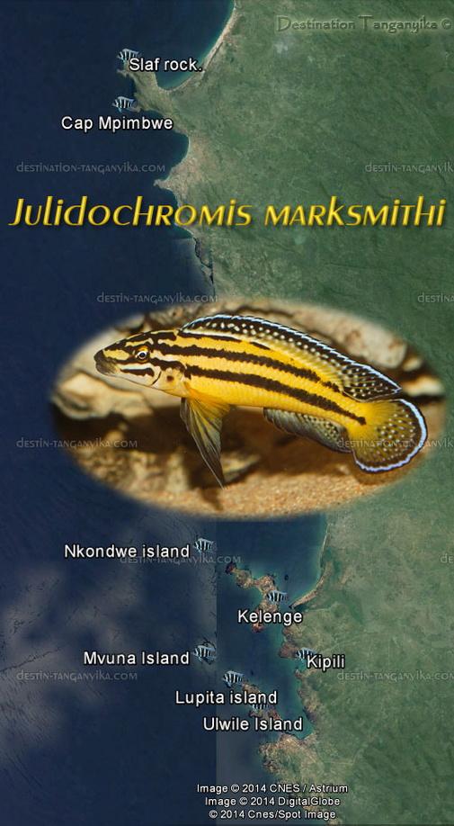 repartition-julidochromis-marksmithi-a.jpg