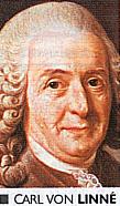 Karl von Linné | Karolus von Linneaus.
