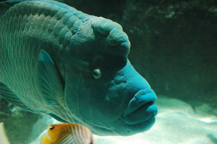 L 39 aquarium de la rochelle une visite exceptionnelle for Gros poisson aquarium