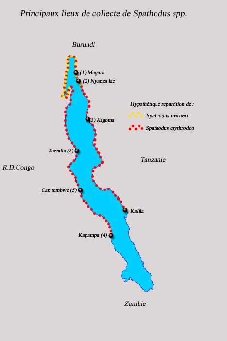 Localités de collecte de Spathodus erythrodon et marlieri.