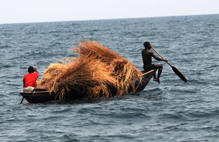 Transport de roseaux à Mtosi.
