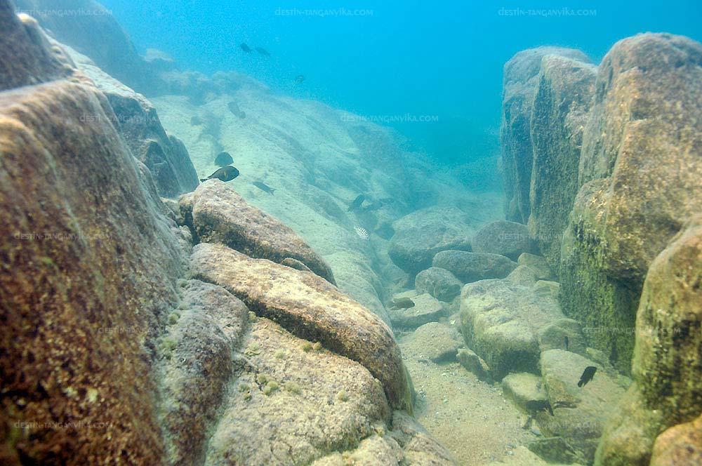 Biotope du lac Tanganyika.