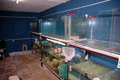 Aquariums en place dans le locarium .