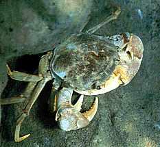 Crabes et Crevettes
