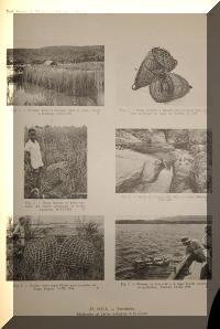 Pêche à la nasse, diverses nasses confectionnées avec des matériaux du bord de l'eau au lac Tanganyika.