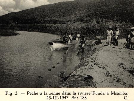 Pêche à la senne, prélèvements scientifique de Max Poll, sur la rivière Punda à Msamba.