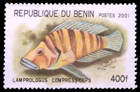 Altolamprologus compressiceps, cichlidé, timbre du Bénin.