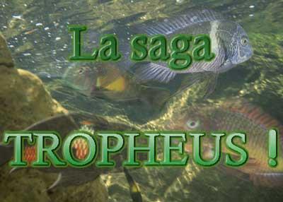 Les Tropheus | La saga | par Laurent Bourdelas.