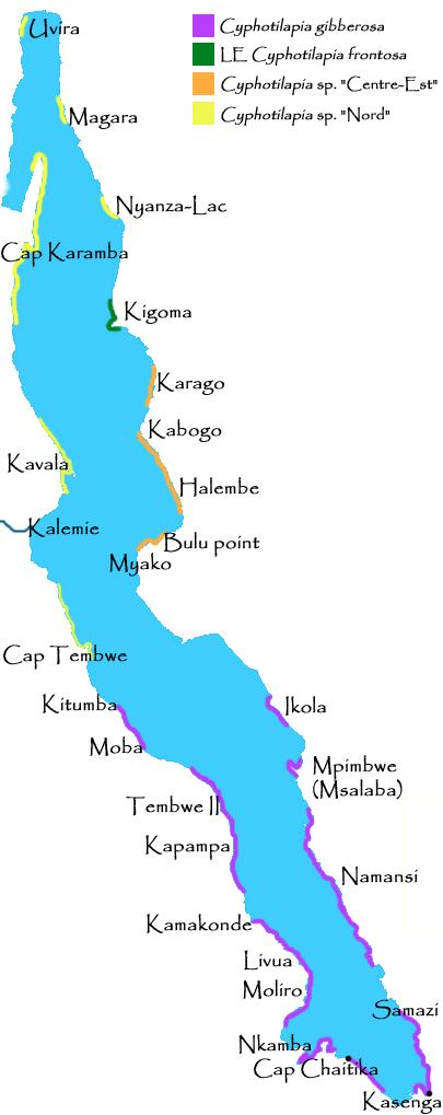Cyphotilapia | carte de répartition de Cyphotilapia frontosa et ses sp. aff.