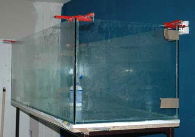 Collage aquarium | locarium | tanganyika .