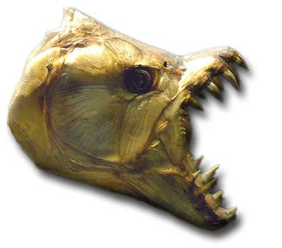 Hydrocynus goliath.