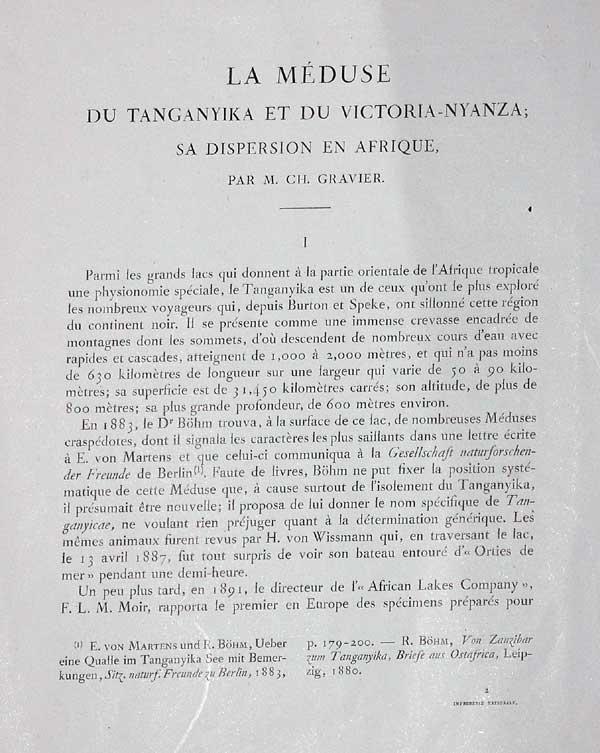 https://www.destin-tanganyika.com/images/limnocnida-tanga2.jpg