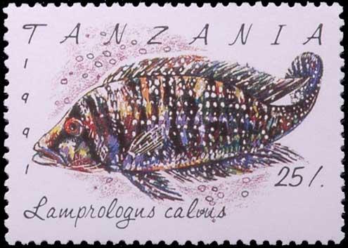 Altolamprologus calvus, cichlidé, timbre de Tanzanie.