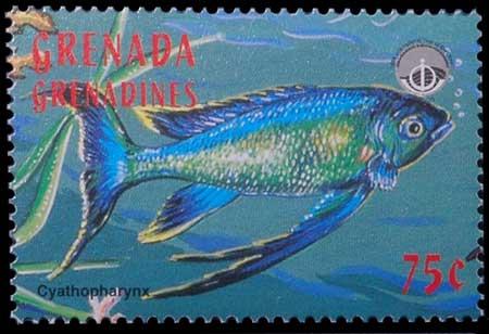 Timbre des Iles Grenadines, Cyathopharynx furcifer.