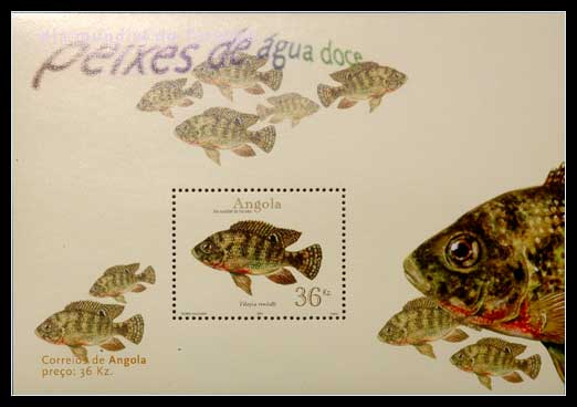 Planche de collection philatélique, Tilapia rendalli.