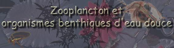 Zooplancton et organismes benthiques d'eau douce.