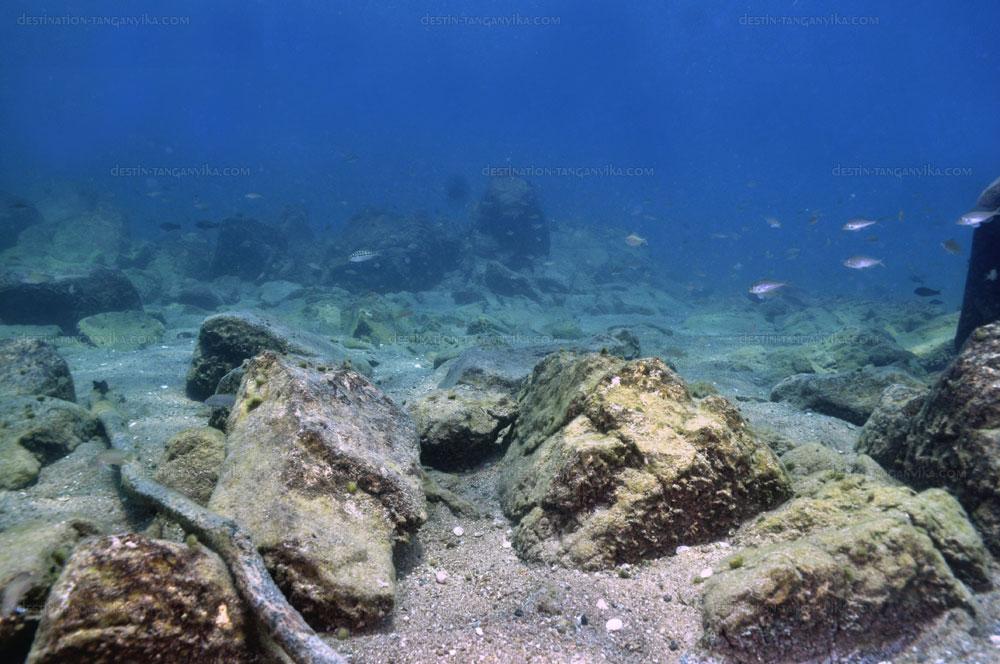 Biotope intermédiaire à Nkondwe island