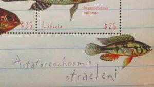 Astatoreochromis du Liberia