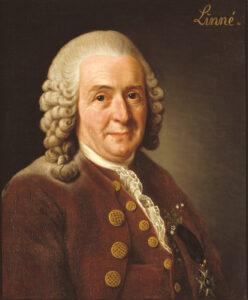 Karl Linneaus