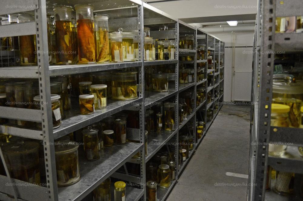 Collection de MRAC