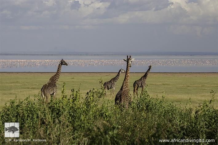 Parc National de Manyara